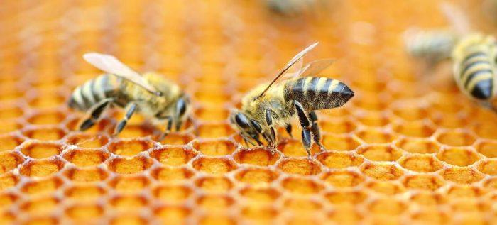 Пчелы строят соты