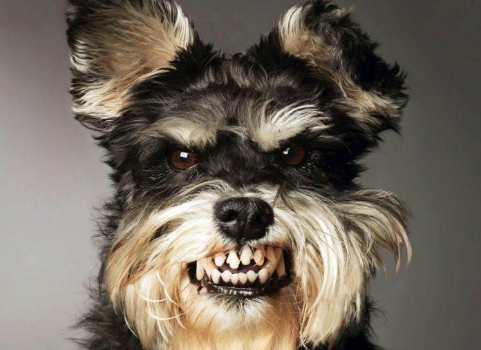 Зла собака