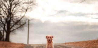 Пес сидит на дороге