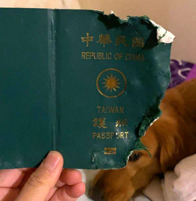 Порванный Кими паспорт