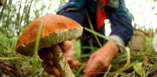 Отруєння дикорослими грибами