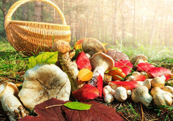 Собирать грибы нужно с предельной осторожностью