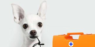 Собаки можуть визначати коронавірус у людей
