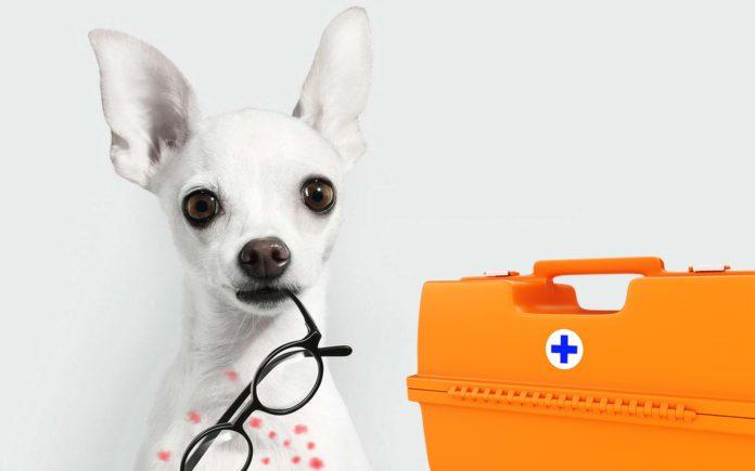 Собаки могут определять коронавирус у людей