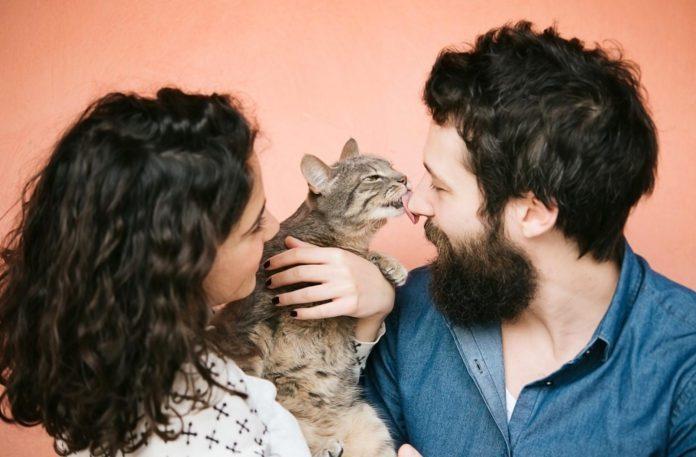 Укуси і подряпини кішок