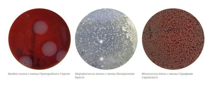 Найденные на иконах бактерии