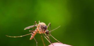 Комарі