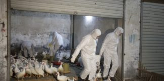 Пташиний грип на Філіппінах