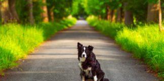Собака на дорозі