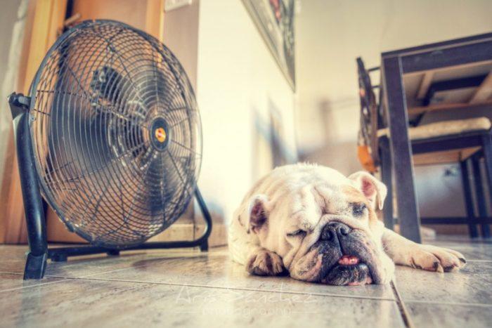 Сон под вентилятором