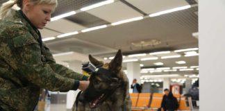 Собаки могут унюхать больных на ковид - 19