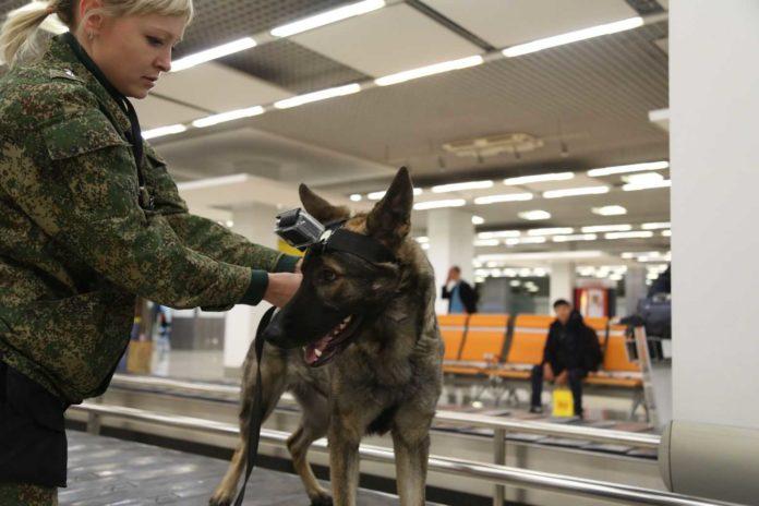 Собаки можуть унюхати хворих на ковід - 19