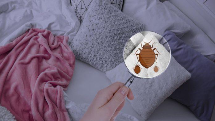 Клопи у вашому ліжку