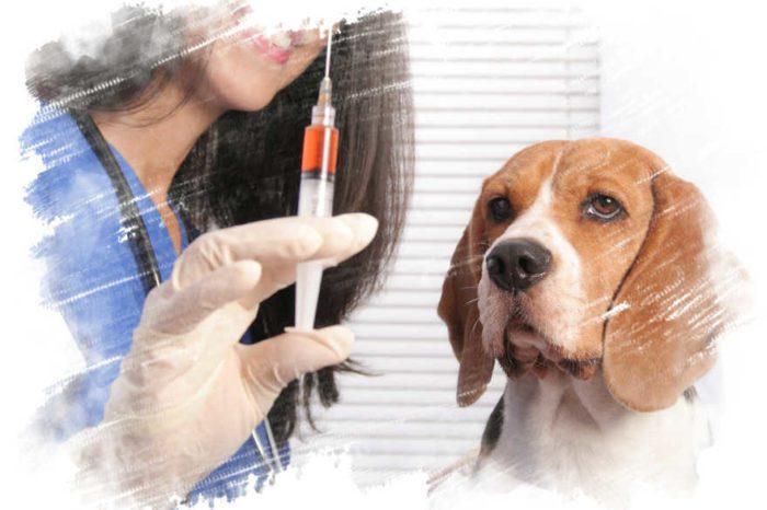 Вакцинации животных от бешенства