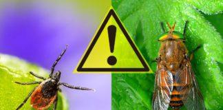 Опасные насекомые Украины
