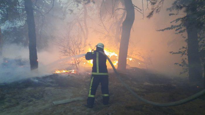Пожежники гасять ліс