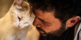 Кіт і людина