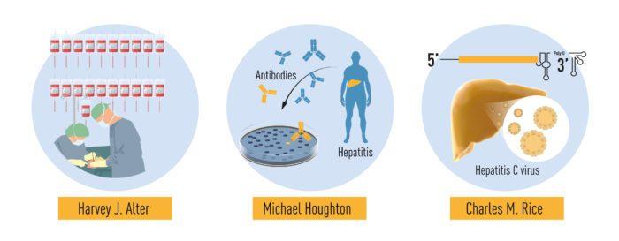 Исследование гепатита С