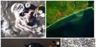 Катастрофа на Камчатке