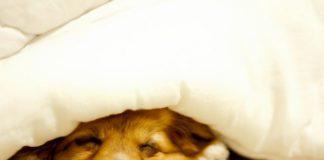 Сон під обтяженою ковдрою