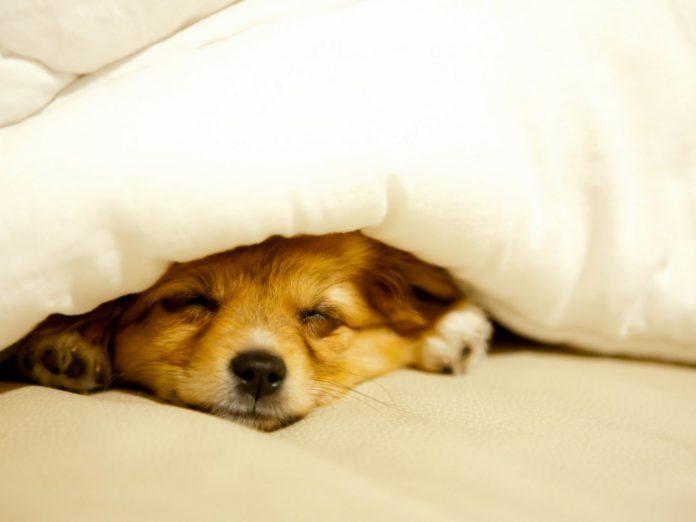 Сон под утяжеленным одеялом
