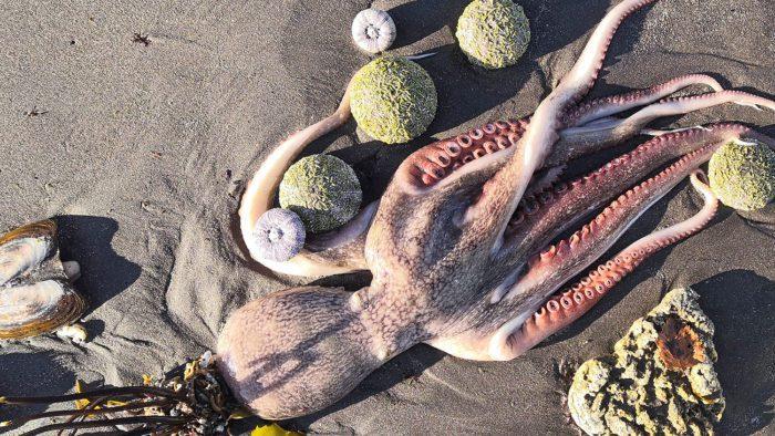Мёртвые морские обитатели